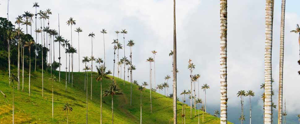 Valle Del Cocora, Colombian Location for Disney Movie Encanto