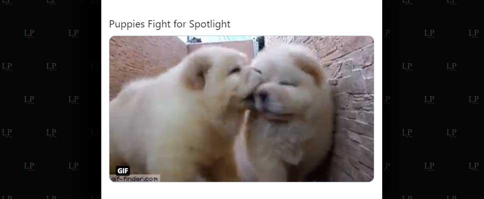 Our Favorite Animal Videos This Week