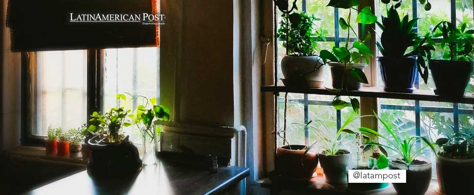 Different pots with plants near a window