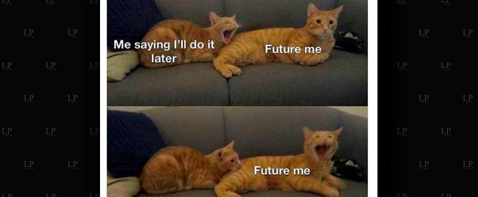 Our Favorite Cat Memes This Week