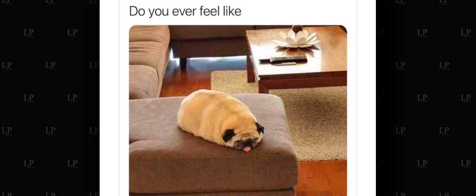 These are our favorite dog memes of the week