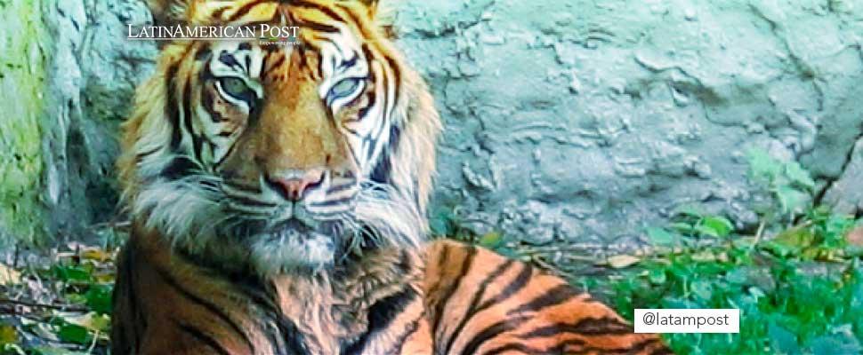 Infografía: ¿Cómo puedes ayudar a las especies en peligro de extinción?