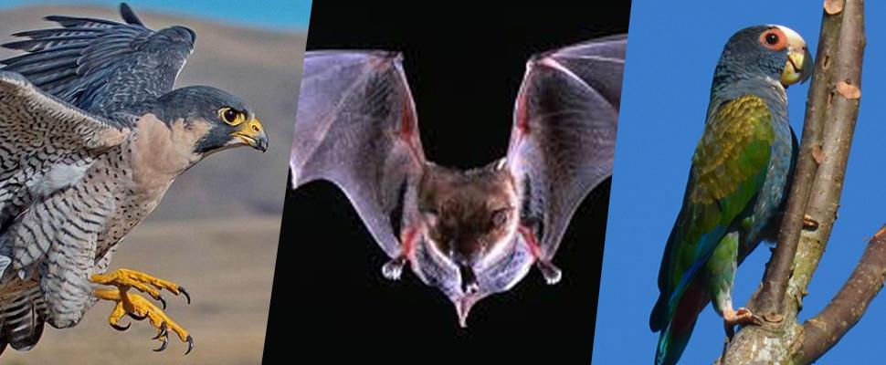 América: Nueva fauna prolifera en las ciudades