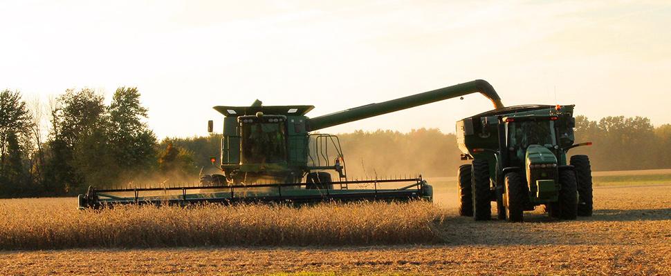 Campo en plena cosecha de soja.