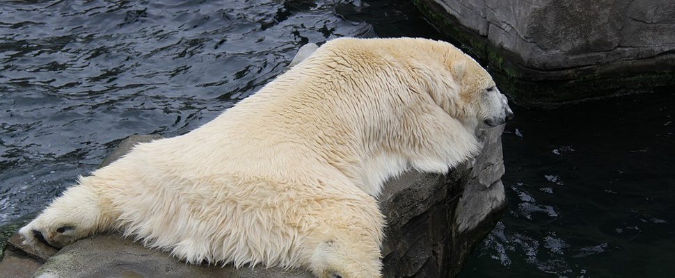 A world without polar bears?