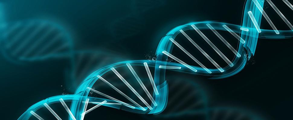 Desarrollan un navegador de la variación genética humana