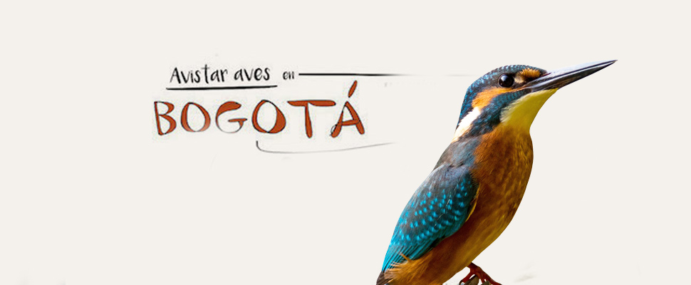 Birds in Bogotá: One more reason for preservation