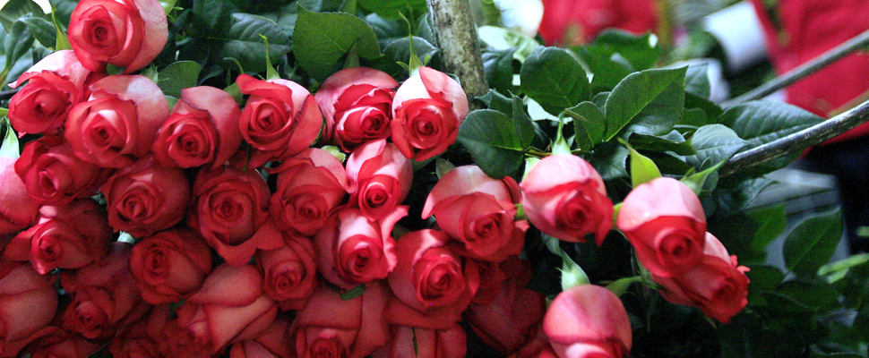 Colombian flowers flood the United States