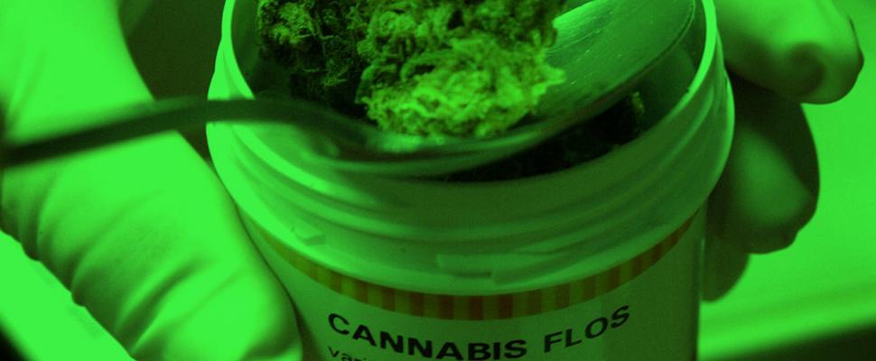 Medical Marijuana: an alternative business for Latin America