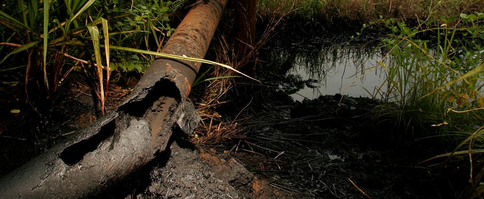 ¿Cómo está en peligro la selva amazónica?