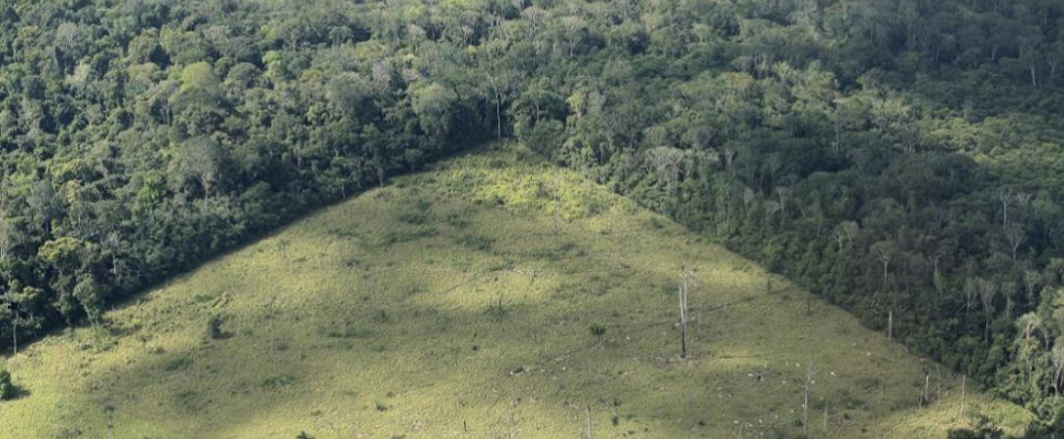 The Amazon rainforest, a forgotten giant