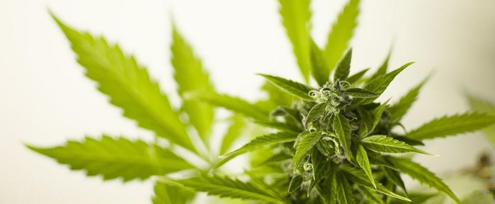 Colombia: ¿El cannabis como oportunidad social y económica?