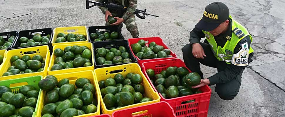 """Green Gold"": The lucrative business of organized crime in Mexico"