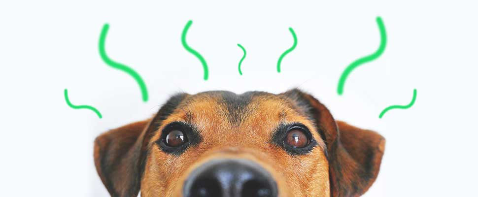 Aprenda cómo eliminar el olor a mascota de su hogar