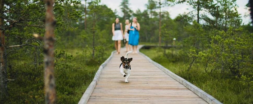 Estos son los mejores destinos para viajar con su perro