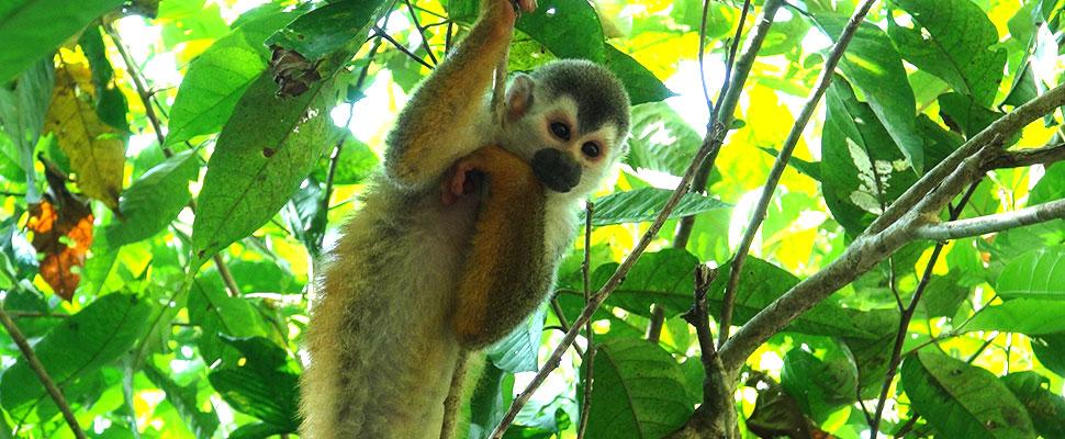 Día de la diversidad biológica: En Colombia hay 1.345 especies amenazadas