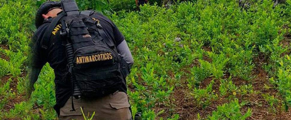 Guatemala: ¿De puente del narcotráfico a país productor de drogas?