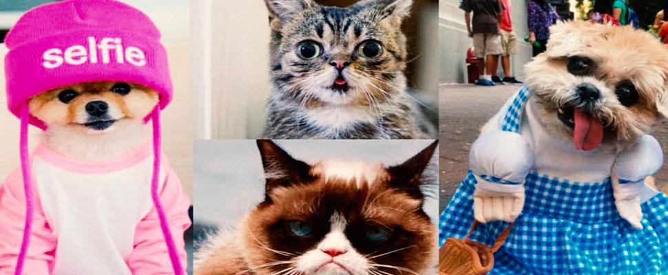 Galería: ¿Cuáles son las 10 mascotas más famosas en Instagram?