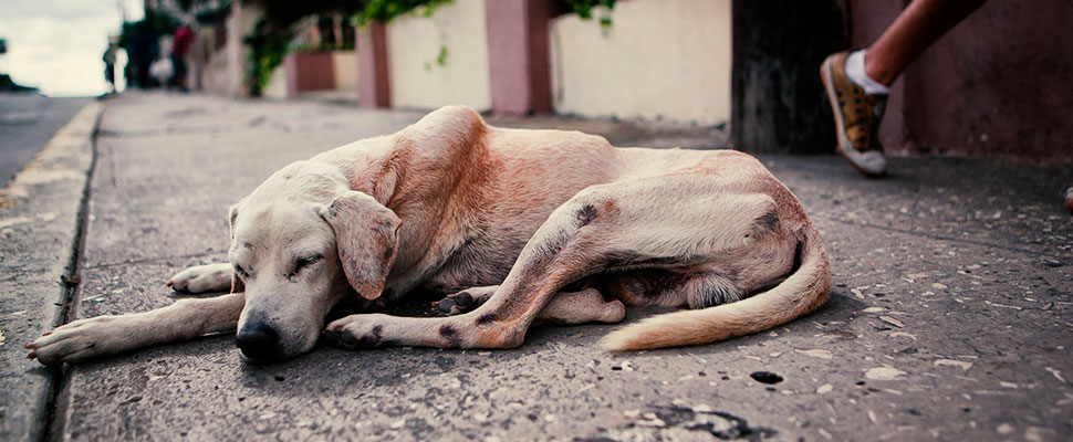 Una vida de perros: la realidad Colombiana del abandono animal