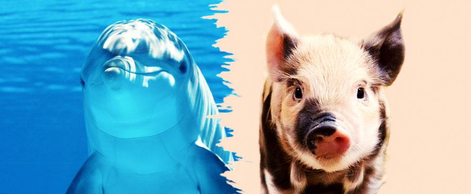 Los seres humanos no son tan diferentes a los animales como se piensa