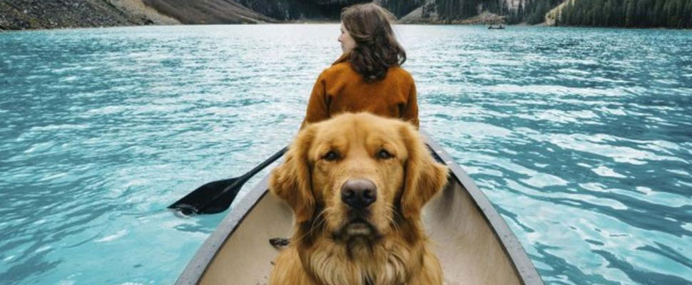 ¿Qué hacer con tu perro cuando te vas de viaje?