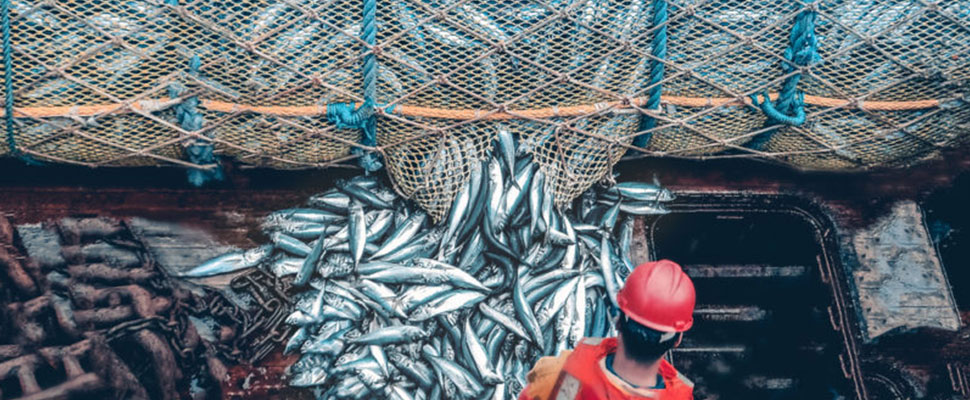 Chile and Argentina under the microscope: the problem of overfishing in Latin America