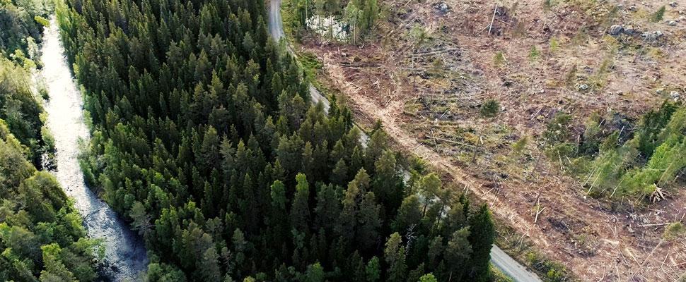 ¿Qué hacen los países latinoamericanos para proteger sus bosques?