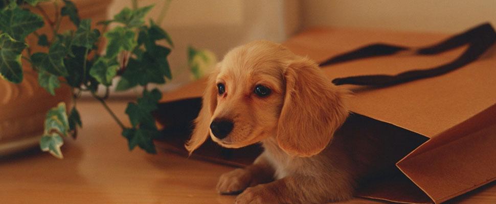 7 cosas que debes saber antes de adoptar una mascota