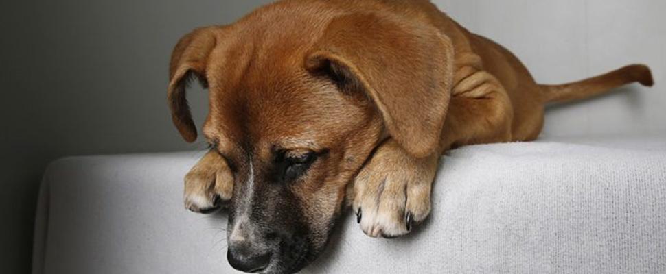 ¿Cómo reconocer y eliminar el estrés en tu perro?