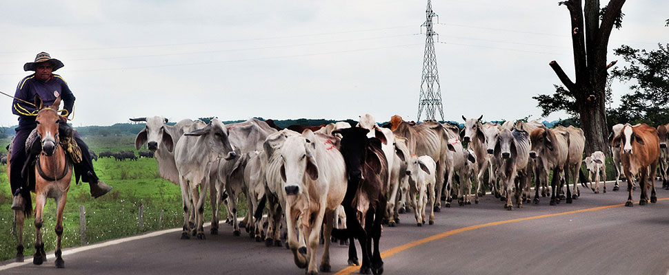 Milk: the main obstacle to the FTA between Colombia and New Zealand
