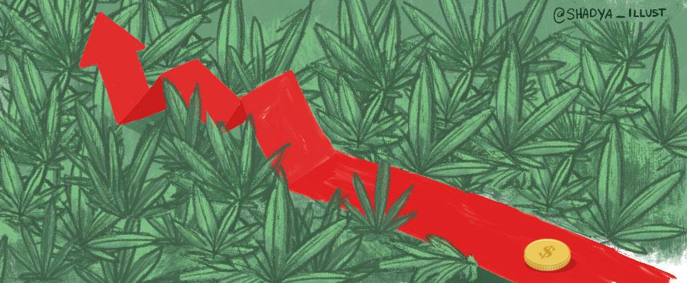 Los impactos económicos de la legalización de la marihuana en Uruguay