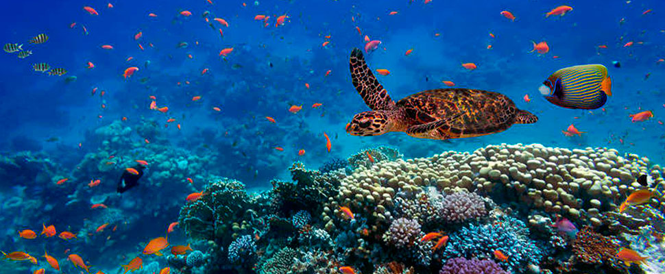 Mexico and Chile are the Latin American leaders in protecting marine natural areas