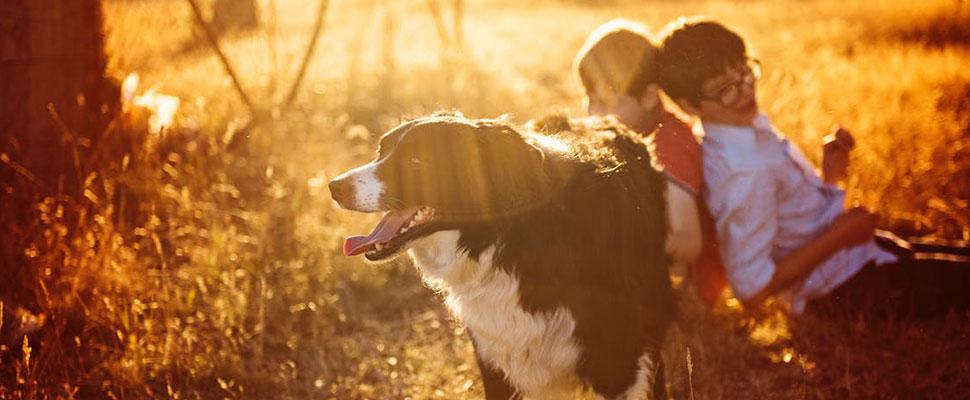 ¡Increible! Estos son los 5 mejores perros niñera