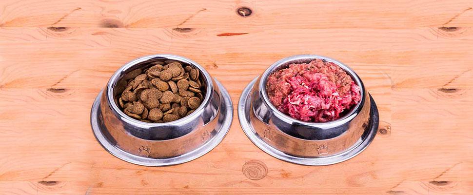 Alimenta bien a tu mascota: los mitos y realidades de la dieta BARF
