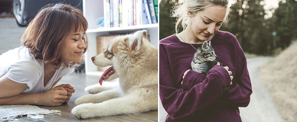 Descubre si eres una persona de perros o gatos