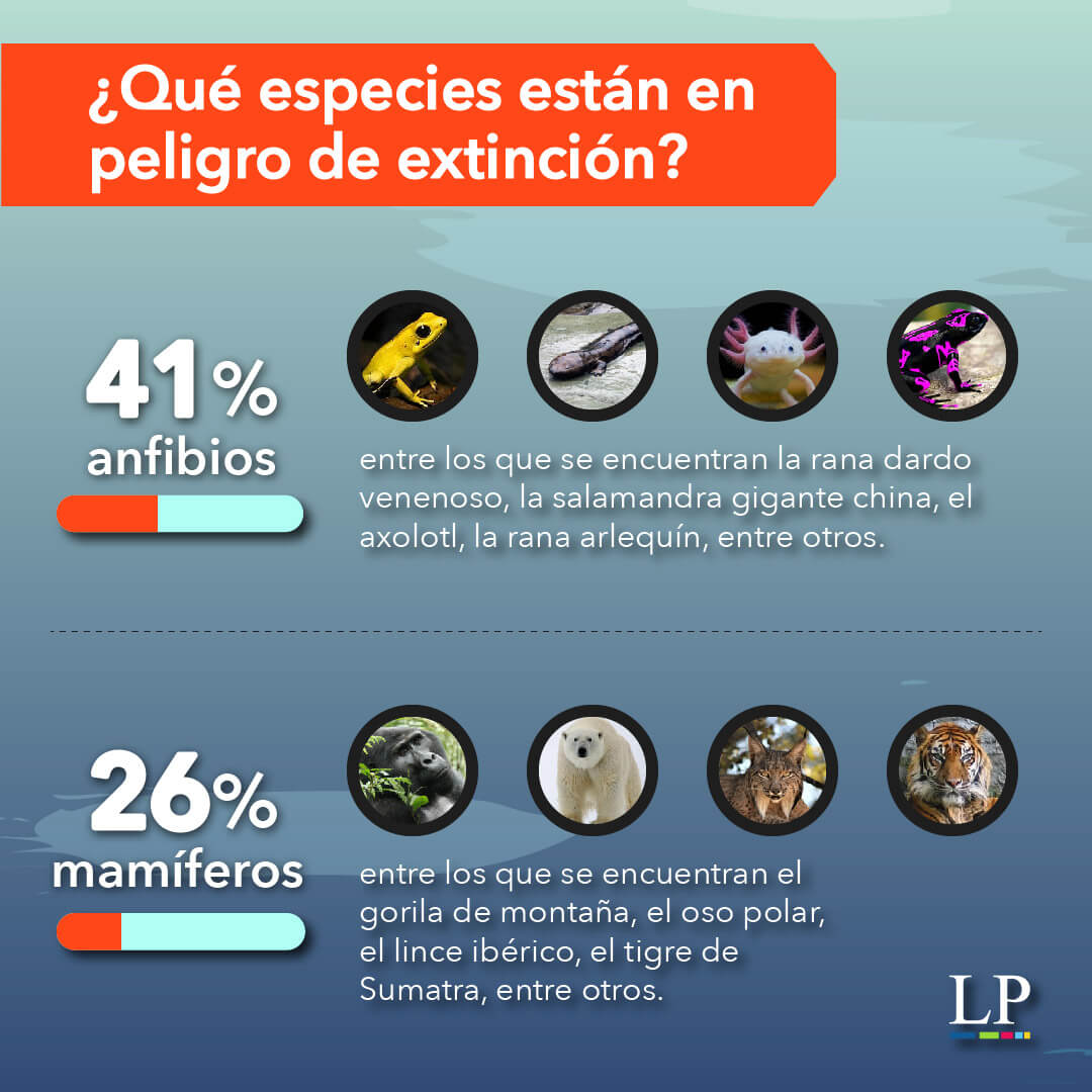 How Can You Help Endangered Species?