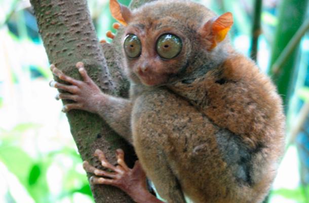 Un mamífero de 2gm y otros 3 datos curiosos