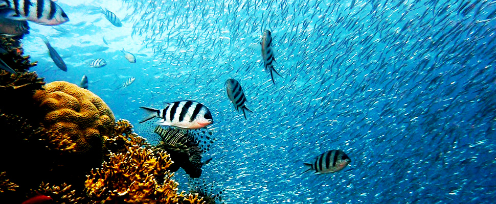 View of fish in the ocean
