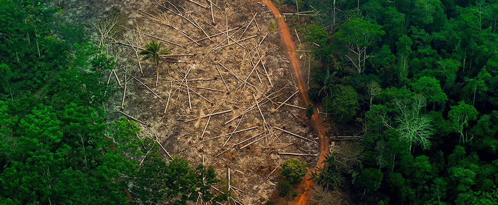 Field with trees felled and environment in deforestation