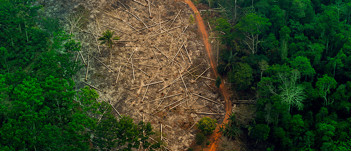Brazil deforestation exceeds 88% in the last year