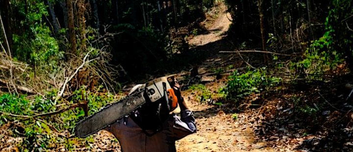 A man carries a chainsaw as he walks in a forest near the municipality of Itaituba, Brazil