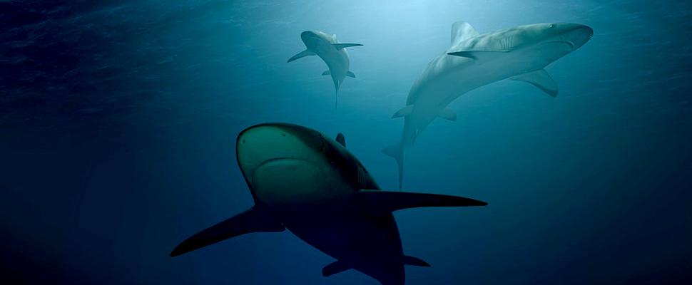 Tres tiburones en el océano