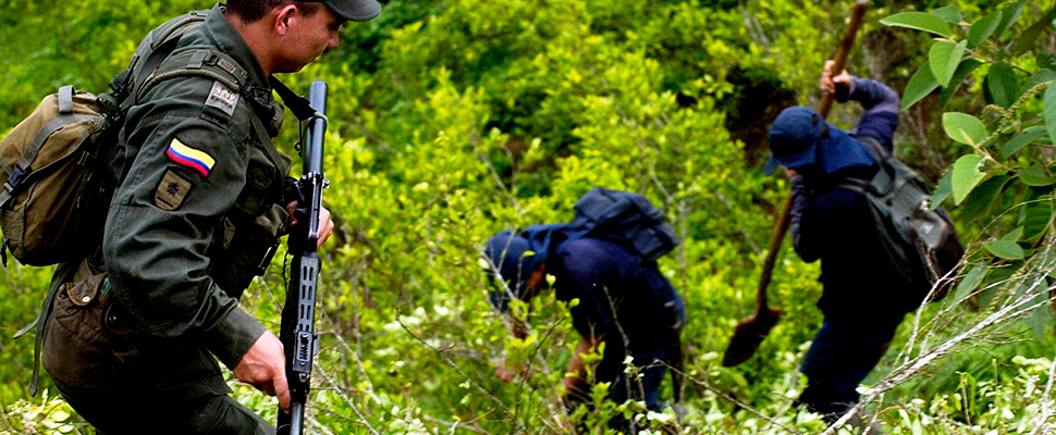 Foto de archivo de 26/11/06 de erradicadores manuales de plantas de coca vigilados por miembros de la policía colombiana